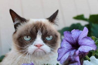 2013-11-Grumpy-Cat-76