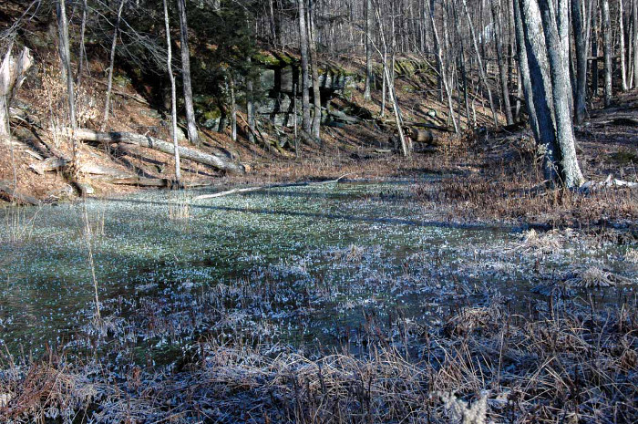 winter walk 7